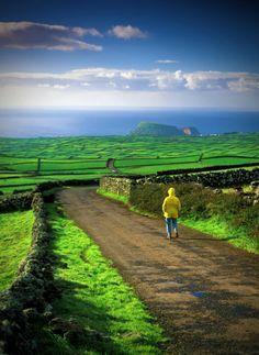 The Forest Reserve of Pinhal da Paz, São Miguel Island, Azores Portugal