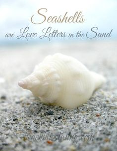 Seashells are Love Letters in the Sand