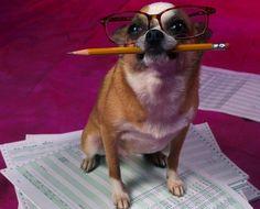 Foto di animali divertenti - Cane contabile