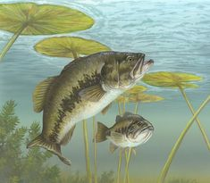 Largemouth_Bass_Painting.jpg (1894×1650)
