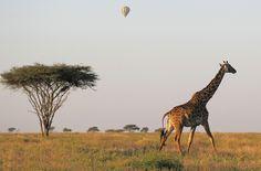 Masai Mara, Kenya. www.travellerboutique.eu