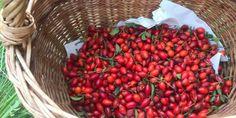 Fantastický šípkový džem podľa tradičnej receptúry Fruit, Food, Essen, Yemek, Meals