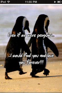 Penguin love<3