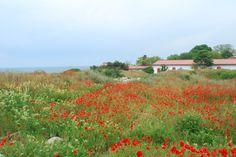Crimea. Ukraine Take Care Of Me, Ukraine, Planting Flowers, Vineyard, Bucket, Explore, Places, Garden, Travel