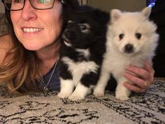 These are some pretty sweet babies. Incredibly smart already. Just like their Mama. Ready Now! Spitz Breeds, Husky, Babies, Sweet, Pretty, Dogs, Animals, Candy, Babys