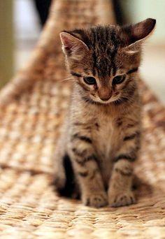 ru_cats_daily: