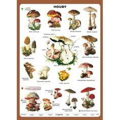 Houby Wild Mushrooms, Stuffed Mushrooms, Poland Culture, Polish Language, English Class, Autumn Activities, Edible Flowers, Kids Education, Fungi