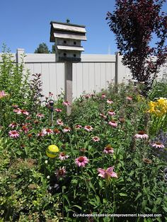 Coneflowers and birdhouse