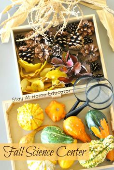 Collect fall items form nature to have in your preschool fall science center - Stay At Home Educator Science Center Preschool, Fall Preschool Activities, Kindergarten Science, Preschool Fall Theme, Learning Activities, November Preschool Themes, Preschool Readiness, Kid Science, Science Chemistry