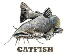 31st Annual Catfish Rodeo, March 17th | 365 Things to do in the ...