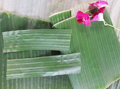 You will need 12 banana leaves, cut into 1.5-inch strips.