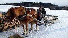 Osa 8: Suomenhevonen Kahdeksas Luontoruutu kertoo suomenhevosesta. Suomenhevonen on hevosrotu, joka on kehitetty Suomessa. Lue ja kuuntele lisää suomenhevosesta Funny Cute, Food Pictures, Finland, Good Times, Nostalgia, Images, Cute Animals, Horses, Dreams