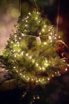 my Christmas tree ?