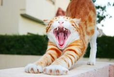 5 Steps to Save Your Cat's Teeth