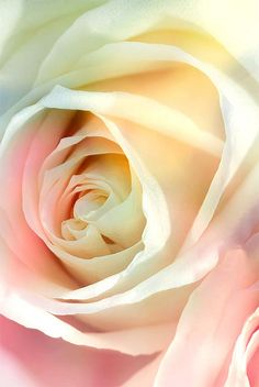 """Pastel rose"" by Michele Veldez on flickr. This is so sweet!"