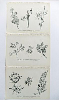 Love the simplicity of these botanical  pen and ink illustrations