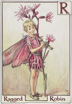Illustration for the Ragged Robin Fairy from Flower Fairies of the Alphabet. A…