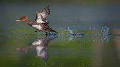RUNNING ON WATER by CHRISTOPHER SCHLAF on 500px