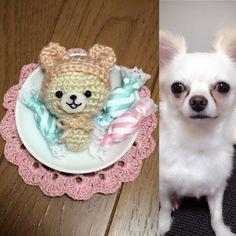 shochan.h.m.t::  家中あさって昔買った目のパーツ発見笑鼻はなかったので刺繍 似てますかぁパンちゃんイメージですうさぎではなくクマでもなくチワワのつもりです若干コリラックマにもみえる #かぎばりあみ #かぎ針編み #かぎ編み #編み物#あみぐるみ#amigurumi #ハンドメイド#handmade #handmadewithlove #dog#dogsofinstagram #dogstagram #doglover #doglife #わんこ#チワワ#ちわわ部 #チワワ#似てるかな #chihuahua #100均 #コリラックマ#手作り チワワです