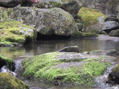 Ideal pool for Fly Fishing for native Brook Trout in the Shenandoah National Park of Virginia.