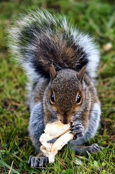 Squirrel Sandwich :: A small reminder that squirrels are omnivores <3