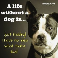 Dog Quote so true! :) I would be lost without my fur babies❤️