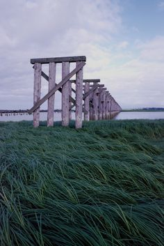 Sea Grass, Train Tracks