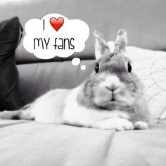 https://www.facebook.com/bunny.diary.on.etsy/photos/pb.286450486866.-2207520000.1432418996./10152037485366867/?type=3&theater