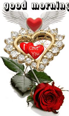1 million+ Stunning Free Images to Use Anywhere Beautiful Love Images, Good Night Love Images, Love Heart Images, I Love You Pictures, Love You Gif, Beautiful Roses, Good Morning Love Gif, Good Morning Beautiful Flowers, Love Flowers
