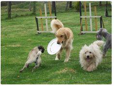 101 mascotas: Adiestramiento para perros