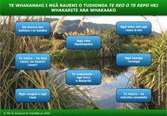 Kei tēnei pāhekoheko ngā hononga ki ētahi rangahautanga mō ngā rauropi o te repo e kīia nuitia ana he momo noho taonga ki te iwi. He taonga tonu te repo ki a ngāi Māori. Koia te tino kāinga o te huhua noa o ngā tipu, ngā ika, ngā manu me ngā moroiti e noho taonga ana ki te iwi. Waihoki, he maha ngā repo e tāwharau ana i ngā tipu nō reira mai ētahi tino rongoā māori. I ēnei tau 150 kua hori ake nei, he nui ake i te 90% o ngā repo o Aotearoa kua ngaro i te mata o Papatūānuku. Science Topics, Science Resources, World View, Scientific Method, Learning, Maori, Studying, Teaching, Onderwijs