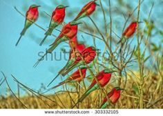 Image result for carmine bee eater painting