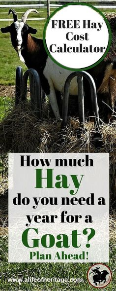 Hay cost calculator. Do you know enough about goat feed? Use this FREE Hay Cost Calculator for Goats. How much hay do you need for a goat? This will help you make a plan and know how much hay to buy a year.