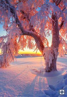 Sunset in winter - Sunset in winter - Winter Photography, Landscape Photography, Nature Photography, Winter Sunset, Winter Scenery, Winter Wallpaper, Nature Wallpaper, Winter Magic, Winter Snow