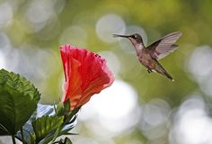 Hummingbird.  Some things are better small.