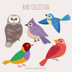 Colors birds collection Free Vector