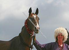 Akhal Teke Stallion - Victory