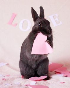 "841 Likes, 11 Comments - rabbit (@rabbit__.__tv) on Instagram: ""Bunny love ❤️ Tag someone you love From @bunniesnrabbits ------------------ #rabbits #rabbitsofig…"""