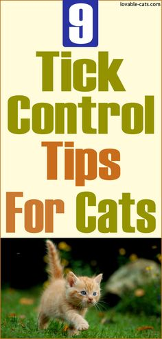 9 Tick Control Tips For Cats Funny Animal Videos, Funny Animals, Cute Animals, Beautiful Cats, Animals Beautiful, Tick Control, Animal Projects, Ticks, Cool Cats