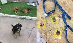 Posto de gasolina 'contrata' três cães abandonados e vira exemplo - ANDA - Agência de Notícias de Direitos Animais