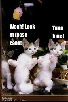 Tuna time!hahaha