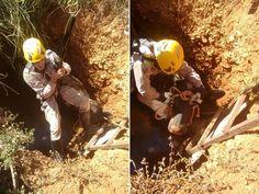 Bombeiros realizaram resgate do animal em fossa em Senador Canedo Goiás (Foto: Divulgação/Bombeiros)