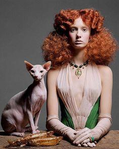 Bastet Spirit Sphynx - Hairless Cats - Hairless Cat For Sale