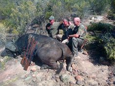 I spent the day on a hardcore buffalo hunt near Graafwater. This bad boy went rogue and broke out of the resrve, we ended shooting him high up in in a kloof. He tried his best to ambush and evaid us. Measured 36 inches on Rowland ward and should score above 53 on SCI.