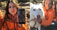El cazador de Villa del Prado (Madrid) ha sido condenado a 1 año y 6 meses de cárcel pero los animalistas recurrirán: #villadelprado #spain #españa #madrid #perro #perros #maltratoanimal #maltrato #animales #animal #noticias #noticia #schnauzi #dogs #dog