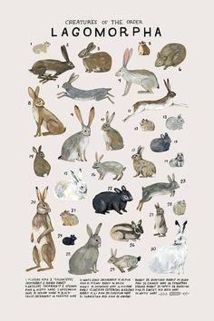 Criaturas de la orden Lagomorpha-vintage inspiraron poster de