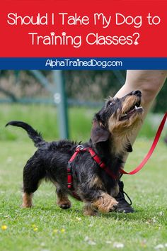 Training dogs using positive reinforcement is effective but time consuming. Using clicker training for dogs makes the training faster and easier Basic Dog Training, Dog Training Classes, Training Your Puppy, Training Dogs, Training School, Training Videos, Dog Clicker Training, Leash Training, Potty Training