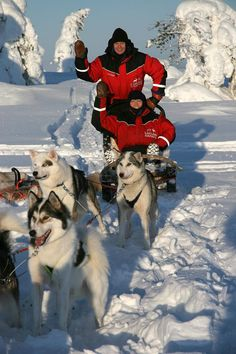 Husky dog sled safari, Lapland.