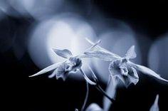 Cuadro Orchid II