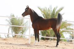 Masoud Al thallth